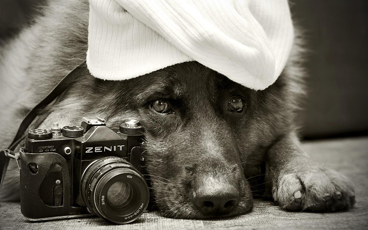 Fotografia Pet