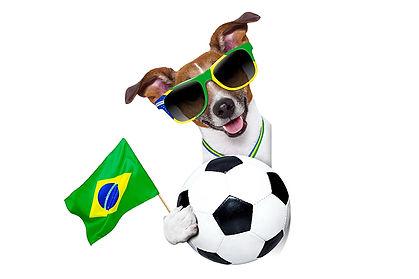 dog walker brasilia