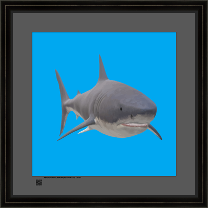 sharksqnattwov16x16fr.png