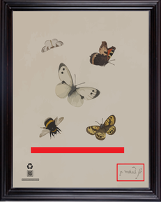vlinderStudyofFourButterfliesandaBumbleb