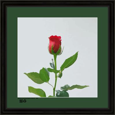 rosesingleredRRNBDV16X16BFR.png