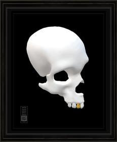 skullfragv11x14BFR.png