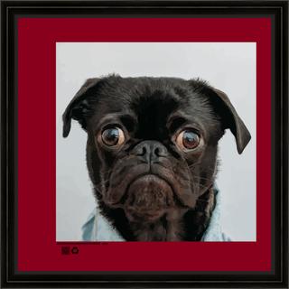 portraitdogbeV16x16fr.png