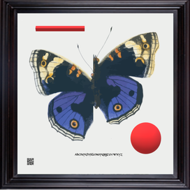 FRAMEDBUTTERFLY3DBUF.png
