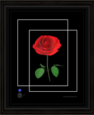 rose1232021sBC11x14bfr.png
