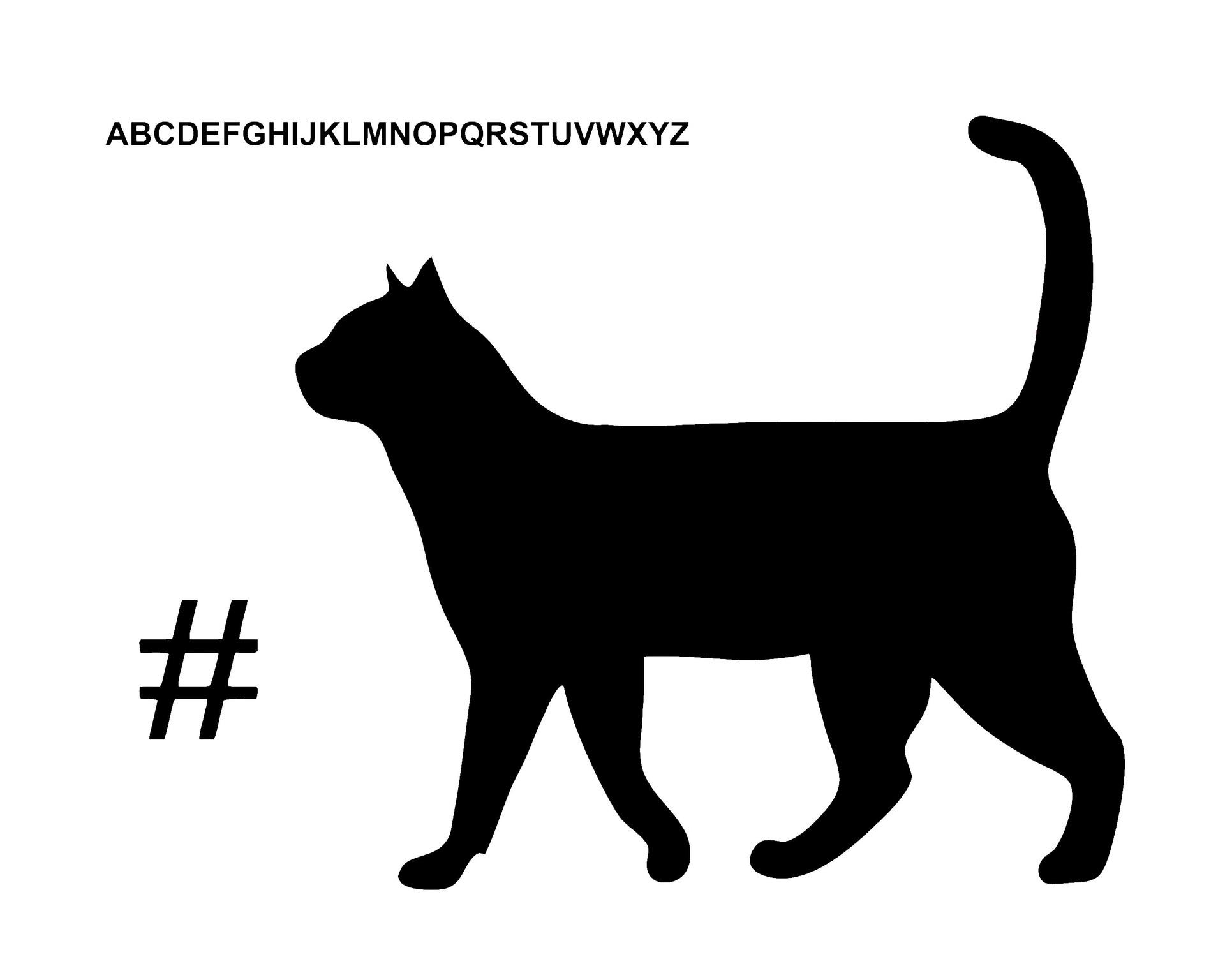 catBLACKWHITESYM8X10.jpg