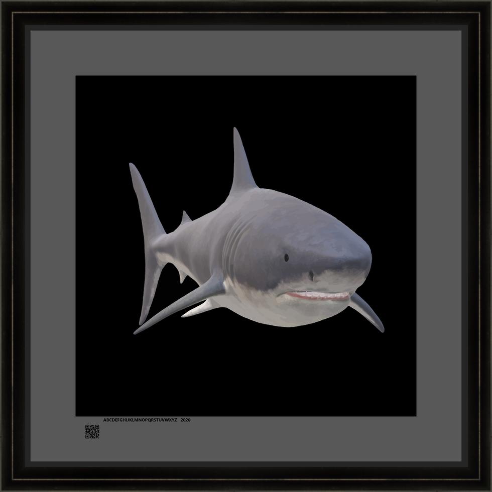 sharksqnatonev16x16fr.png