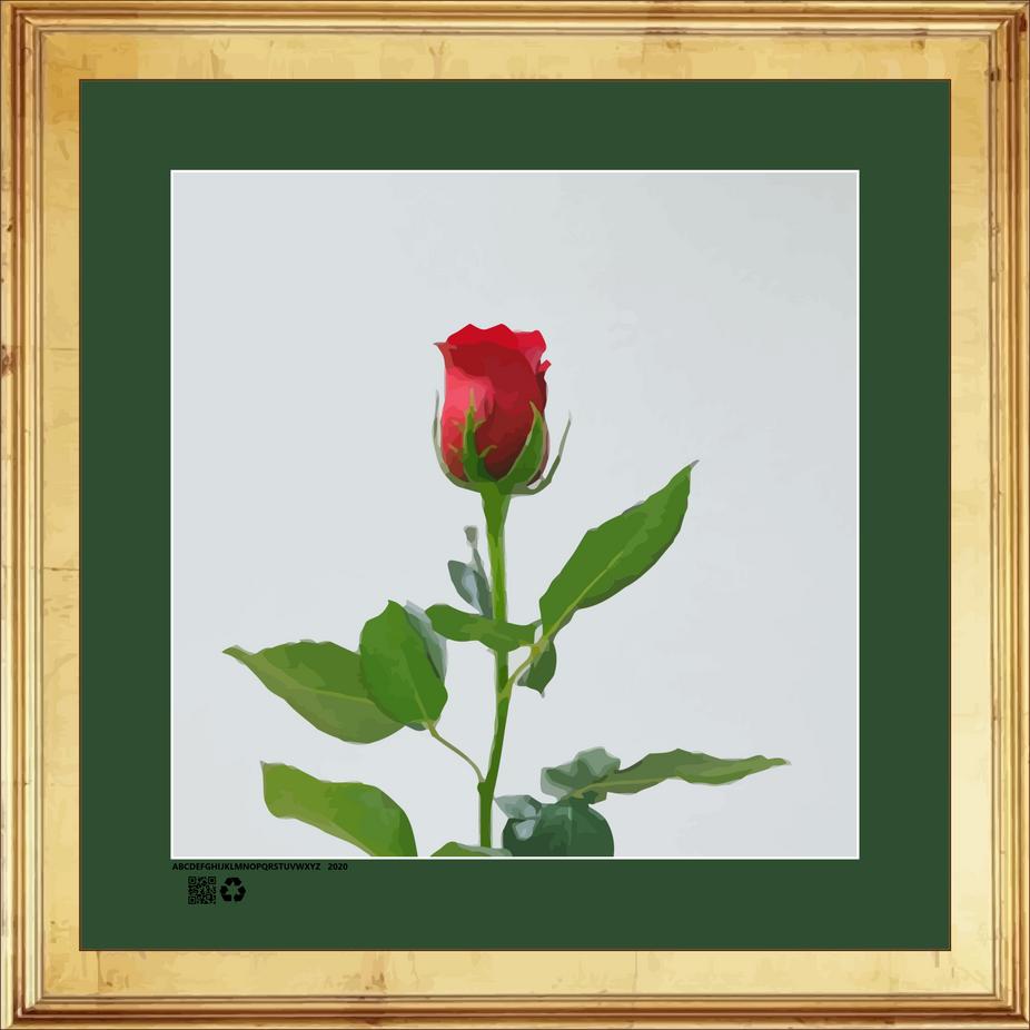 rosesingleredRRNBDV16X16GFR.png