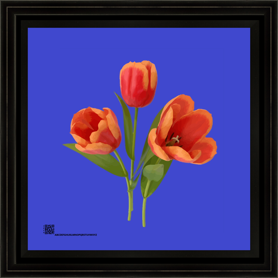 tuliporangeonblue1062020v12x12bfr.png