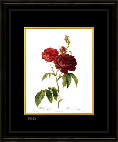 ROSEgilteRedoute16x20fr.png