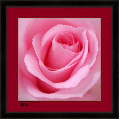 rosepinkcusqv16x16BFR.png