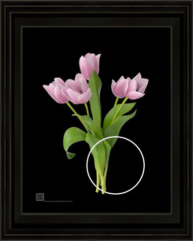 tulipswithwhitecircle1062020v8x10BFR.png