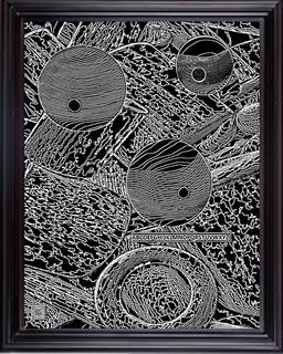 framedlbwam16X2019.png