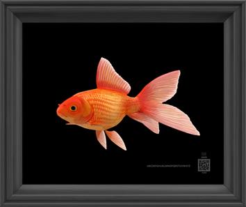 symbolGoldfish11262020v8x10bfr.png