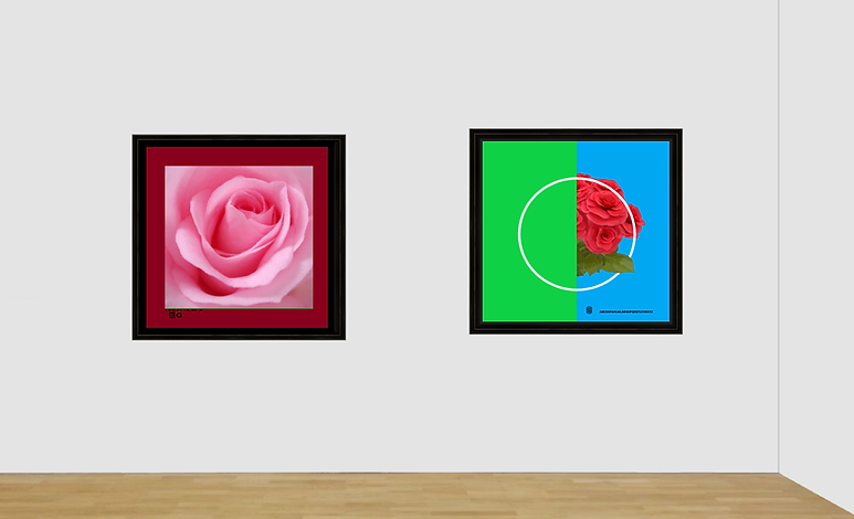 images of roses