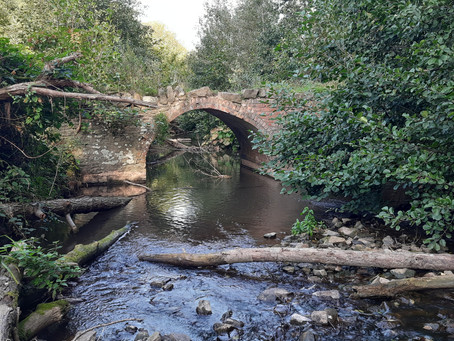 DANCE ON LOCATION 021: Knapp and Papermill Nature Reserve, Worcestershire, UK