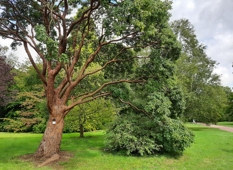 DANCE ON LOCATION 013: Westonbirt National Arboretum, England, UK