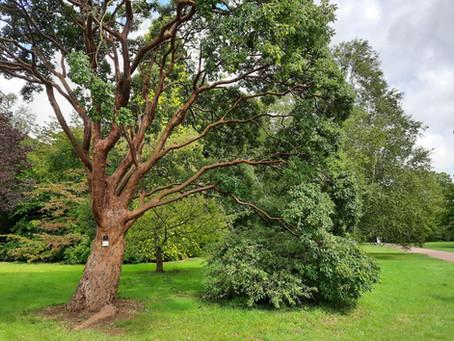 DANCE ON LOCATION 013: Westonbirt National Arboretum, England, UK