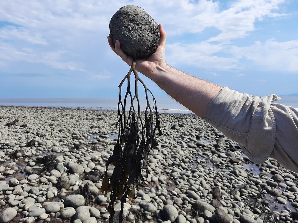 Seaweed on Limpert Bay