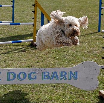 Dixie Dog Barn Bone.jpg