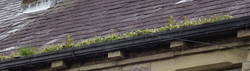 if you see this in your gutters then you need our gutter cleaning service