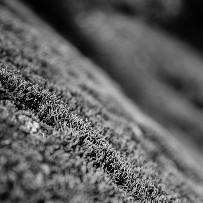 Black and White Moss