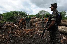 0718.brazil.illegallogging.campaign.600.