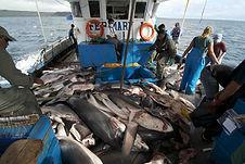 200804-illegal-fishing-galapagos-jm-1639