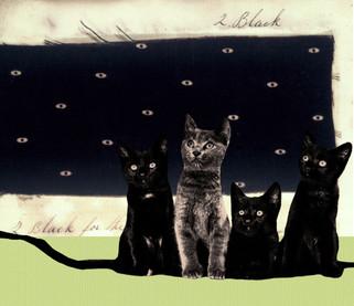 CATS IN THE DARK