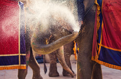 Amber Fort Elephants