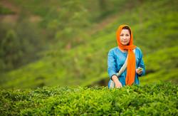 Tea picker Munnar