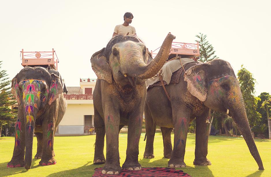 Jaipur elephant farm