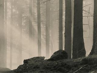 Cartier-Bresson's decisive moment concept applied to Renger-Patzsch and Alberto Alicata's works