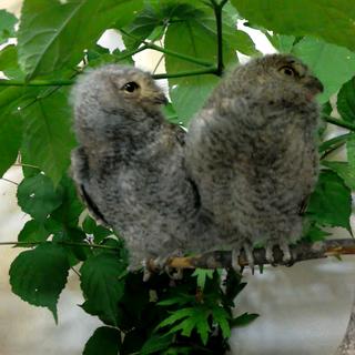 【八東ふる里の森】 鳥Photos