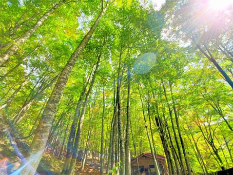 無料のオンライン旅番組【たびOhライブ!日本2021】で八東ふる里の森が紹介されます!