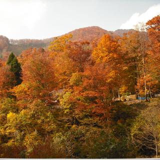 【八東ふる里の森】 森Photos