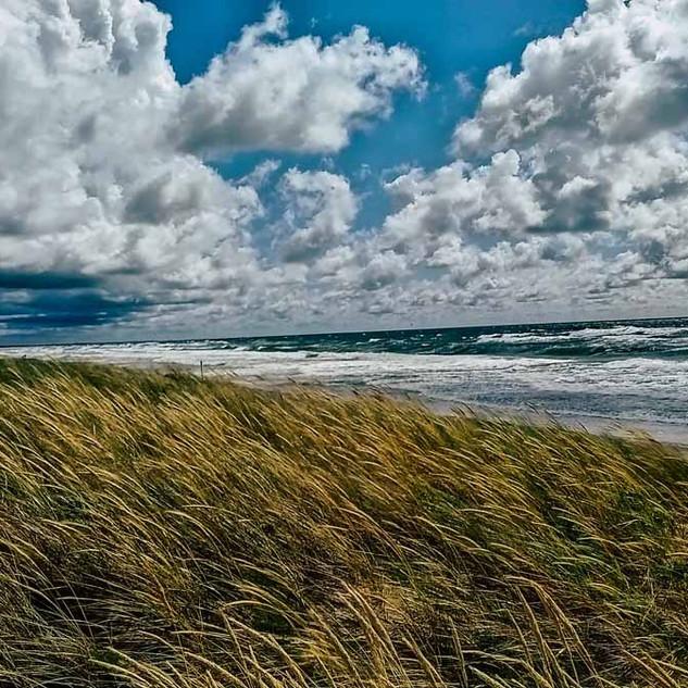 Wind in den Dünen
