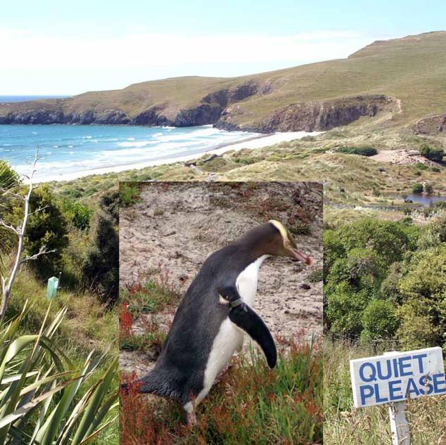 pinguin place.jpg