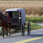 Typische Pferdegespanne der Amish people
