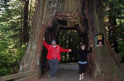 Tour Thru Tree