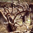 Wo ist hier Rudolf ...?