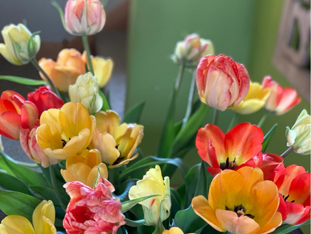 The tulip CSA this week will look a little like these!