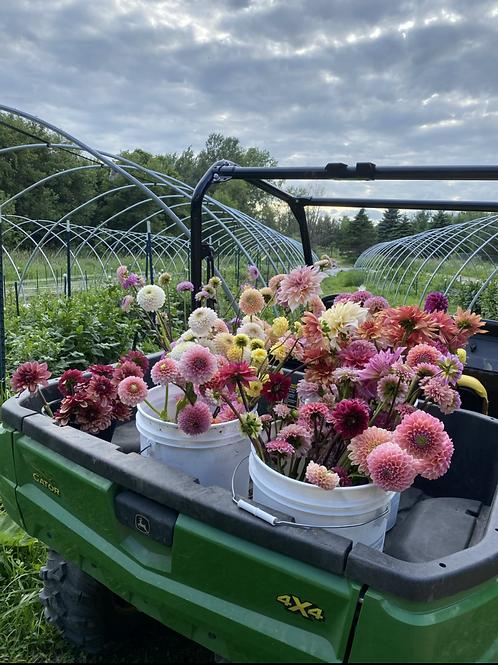Bi Weekly, 8 Weeks Mixed Flower CSA