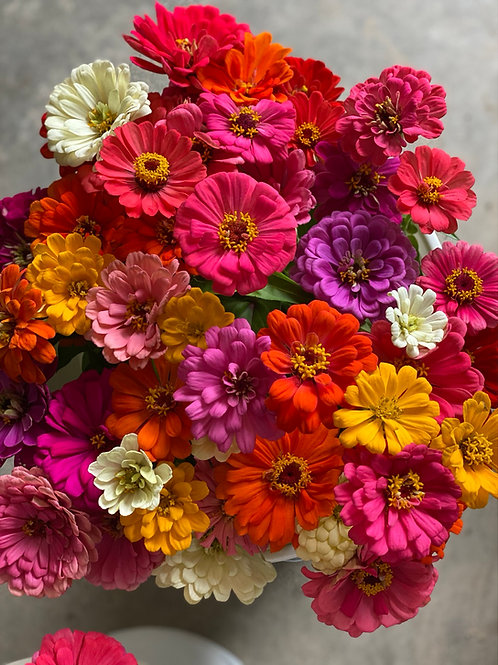 Zinnia Mixed Bouquets