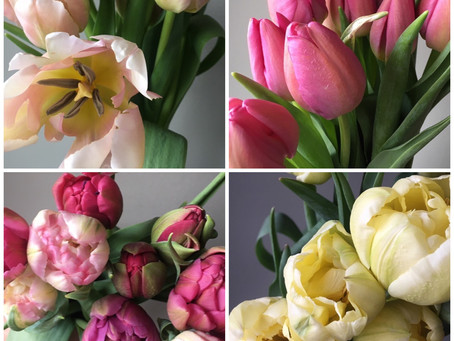 Find these beauties and more in our Tulip CSA and our Mixed Early Spring CSA... starting soon...