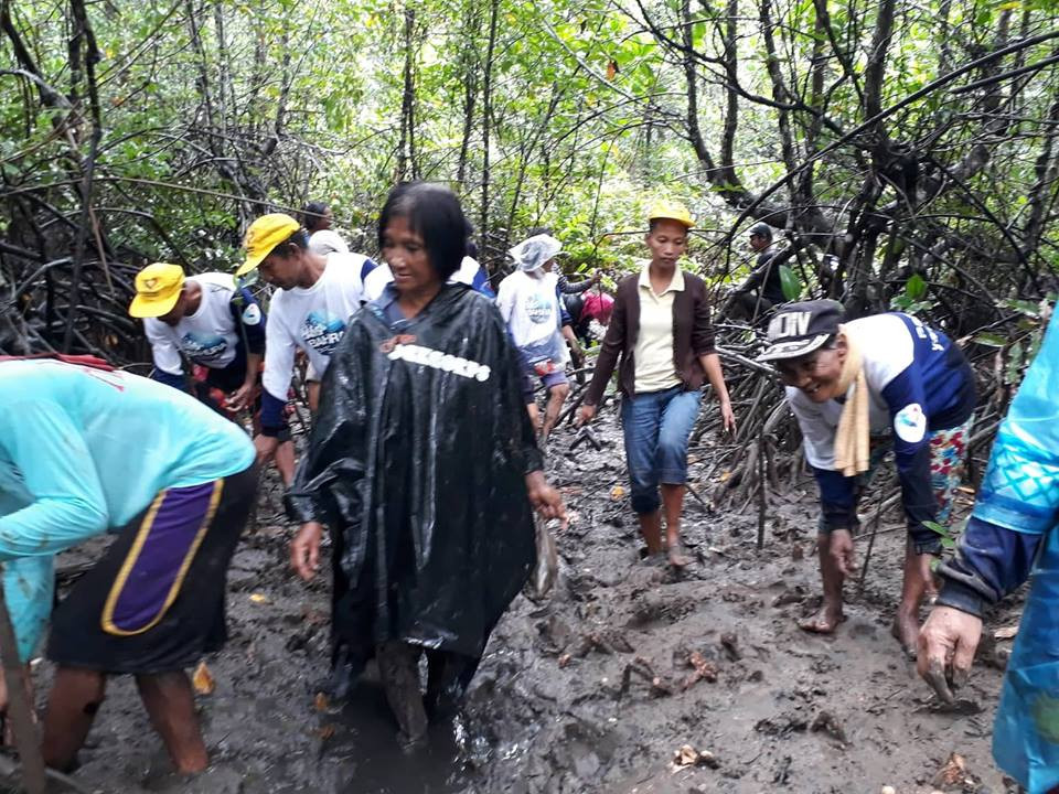 Mangrove Tree Planting 1.jpg