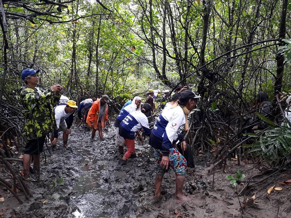 Mangrove Tree Planting 13.jpg