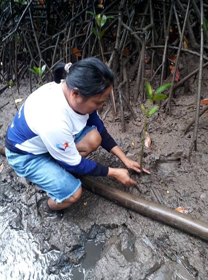 Mangrove Tree Planting 16.jpg