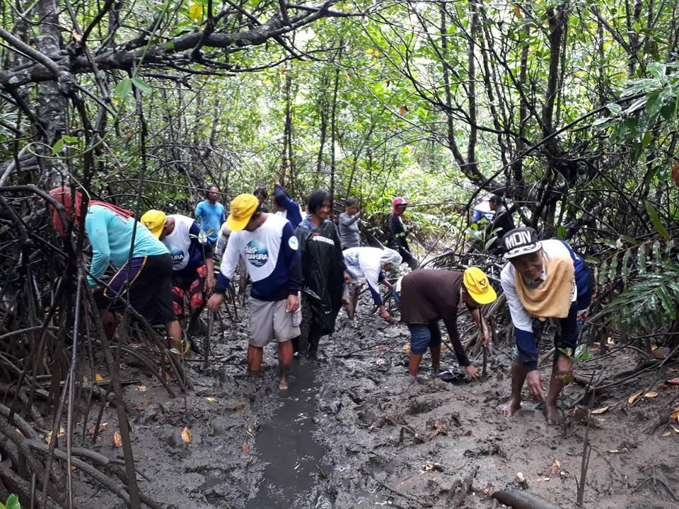 Mangrove propagules planting thru People's Organization of El Nido Palawan in the Philippines