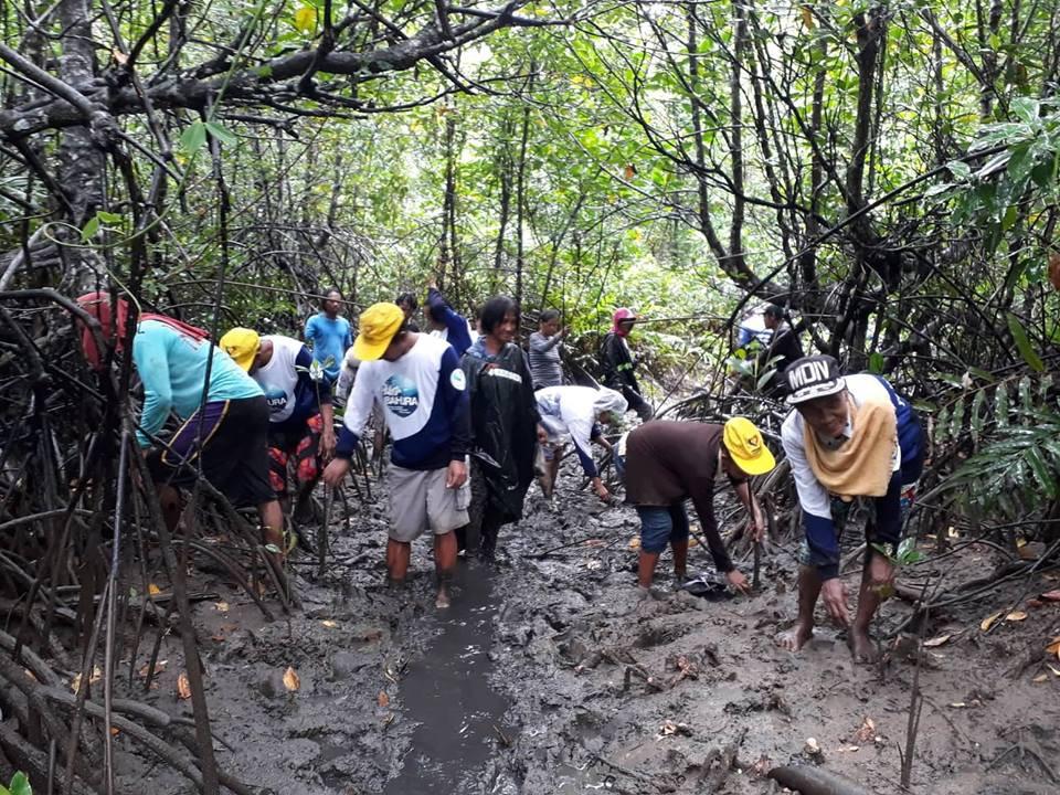 Mangrove Tree Planting 15.jpg
